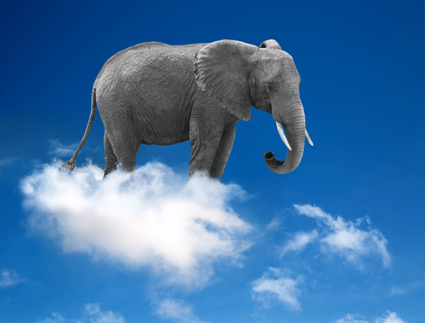 Elephant on a cloud